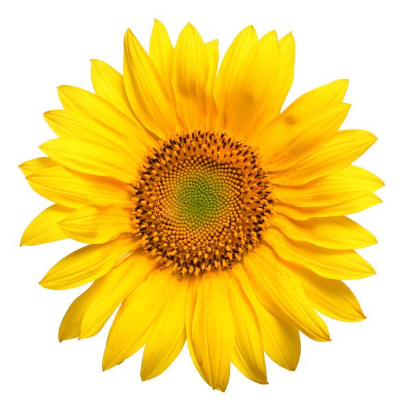 Ti si moja sončnica!
